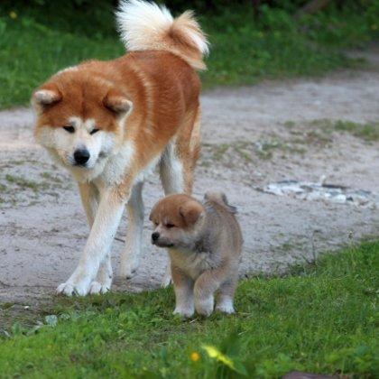 Yogis ar kucēnu