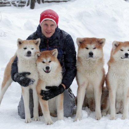 Akita inu ziemā ģimene